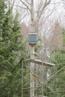 4 Cell Deluxe Bat House Installed On A Tree