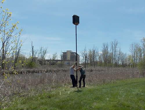 Raising Second Bat House Pole